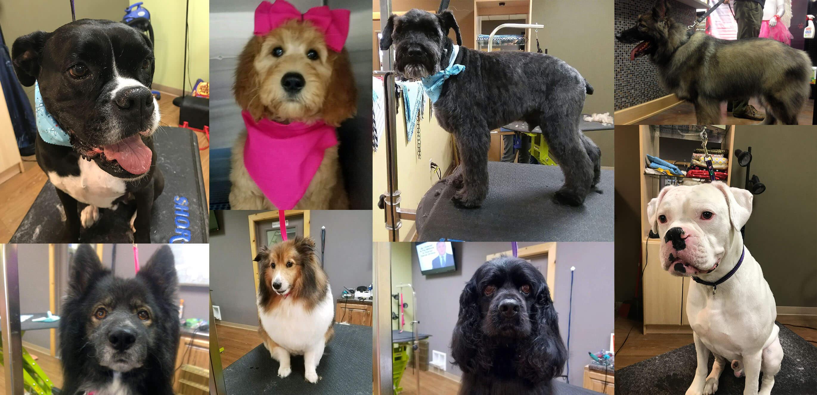 Pet Grooming Healthi Paws Valpo