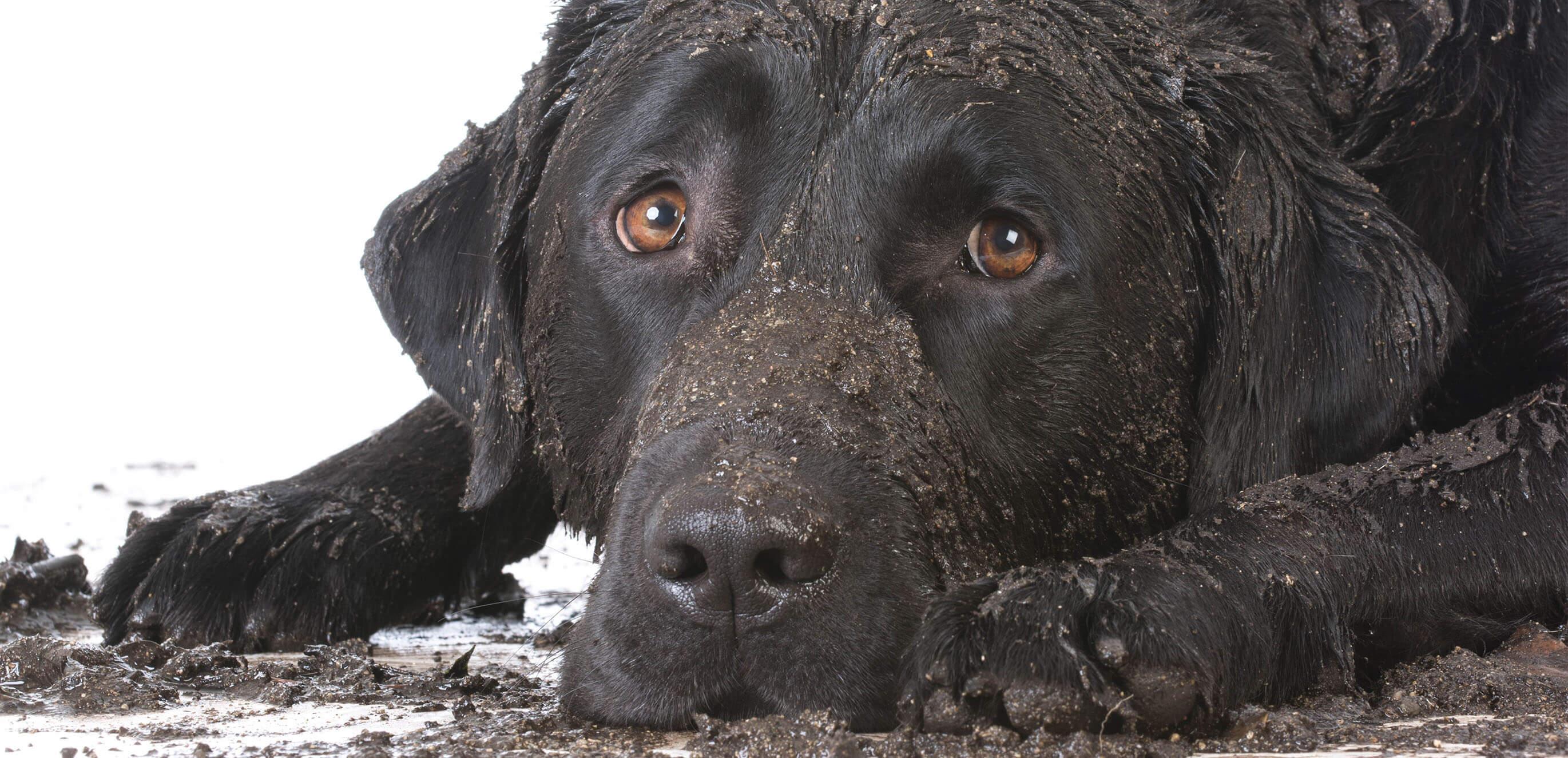 u wash dog wash healthi paws